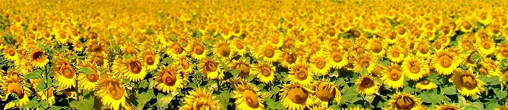 S_цветы_084