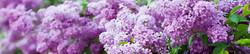 S_цветы_248