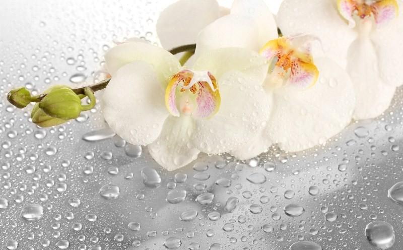 Цветы_265
