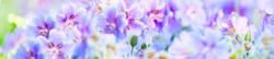 S_цветы_109