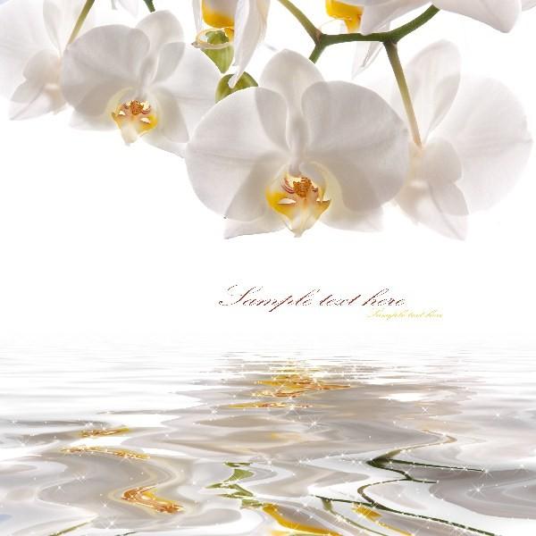 Цветы_171