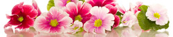 S_цветы_193