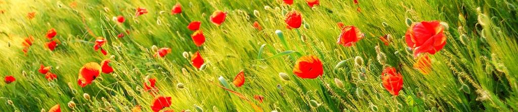 S_цветы_004