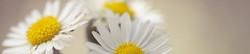 S_цветы_312