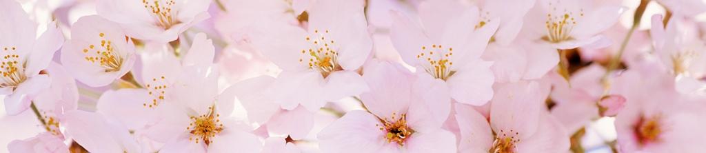 S_цветы_175