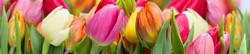 S_цветы_153
