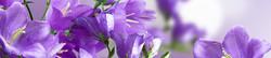 S_цветы_246