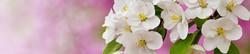 S_цветы_238