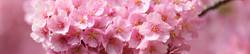 S_цветы_194