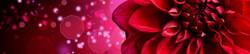 S_цветы_155