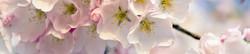 S_цветы_205