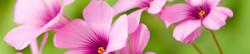 S_цветы_337