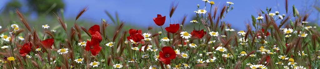 S_цветы_042