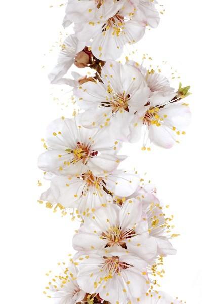 Цветы_196