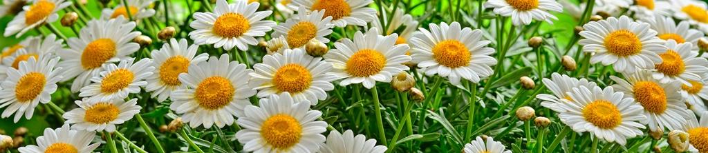 S_цветы_088