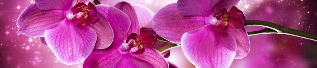 S_цветы_242