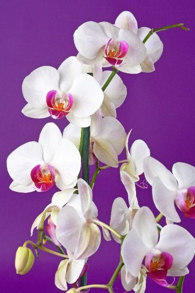 Цветы_236