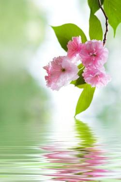 Цветы_015