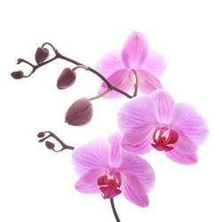 Цветы_174