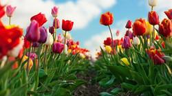 Цветы_164