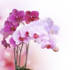 Цветы_156