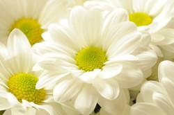 Цветы_092