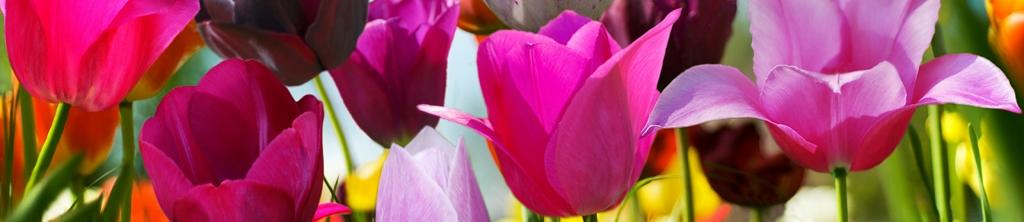 S_цветы_074
