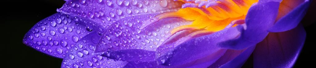 S_цветы_121