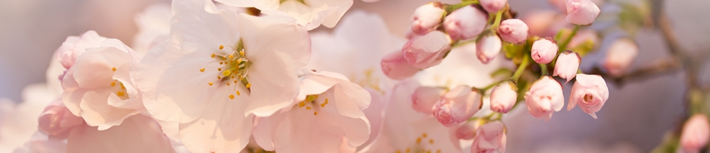 S_цветы_224