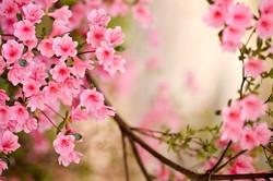 Цветы_180