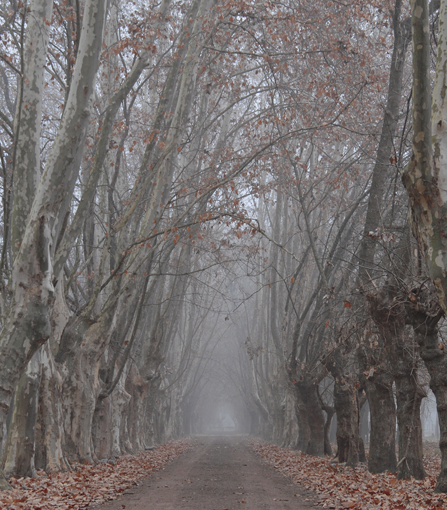 way fog