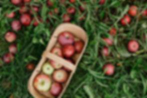 basket-of-fresh-picked-apple.jpg