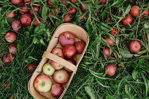basket-of-fresh-picked-apple.jpg