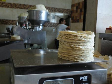 Productores advierten sobre el posible incremento del costo de la tortilla, a 24 pesos