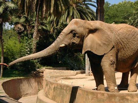Diputado de Morena propone eliminar los zoológicos en la CDMX