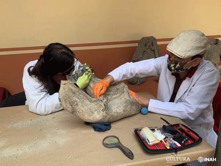 Museo Regional de Guadalajara lleva a cabo curso único en su tipo de material paleontológico