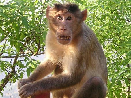 Viruela del mono una preocupante para los Estados Unidos y el mundo