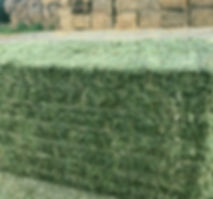 alfalfa grass large square 6-25-19.jpg