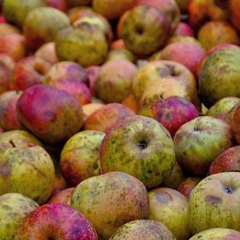 devon-cider-apples.jpg