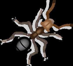 Mette Voldmester - tegning af myre