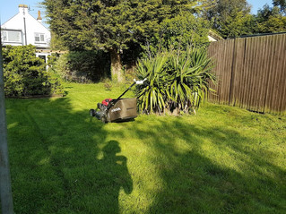 May 2018 - Last minute first cut fitted in on the way home this evening ... now tidied for the custo