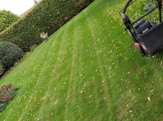 Raining leaves today ... I couldnt mow them up fast enough - www.paulslawns.co.uk