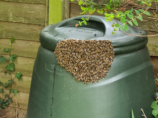 17th August 2021 - Totally docile but I didn't hang around and tempt their patience 🐝🐝