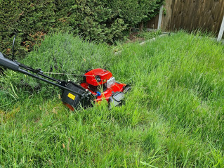20th May 2021 - The Toro mower worked hard today - www.paulslawns.co.uk