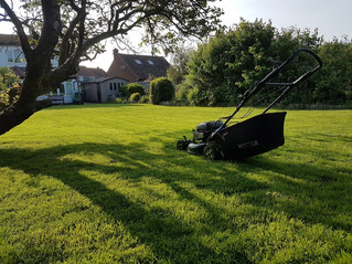 June 2018 - An early evening visit today to help tame this customers lawn. who has now booked me for