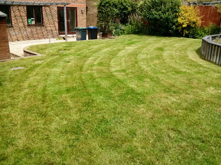 June 2012 - First cut - A lawn that hadn't been cut for over ayear. It took4 visits over a mon