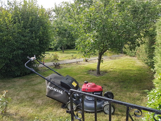 June 2017 - A lawn that had been neglected for months. Was glad for the extra power of the Honda. It
