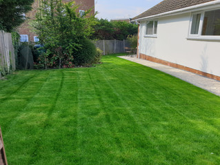 APRIL 2019 - Squeezed in a first cut on a newly laid lawn today ... very green! - www.paulslawns.co.