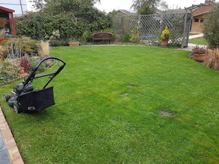 July 2017 - A lovely garden - I keep the lawns cut. The rest is meticulously looked after by the own