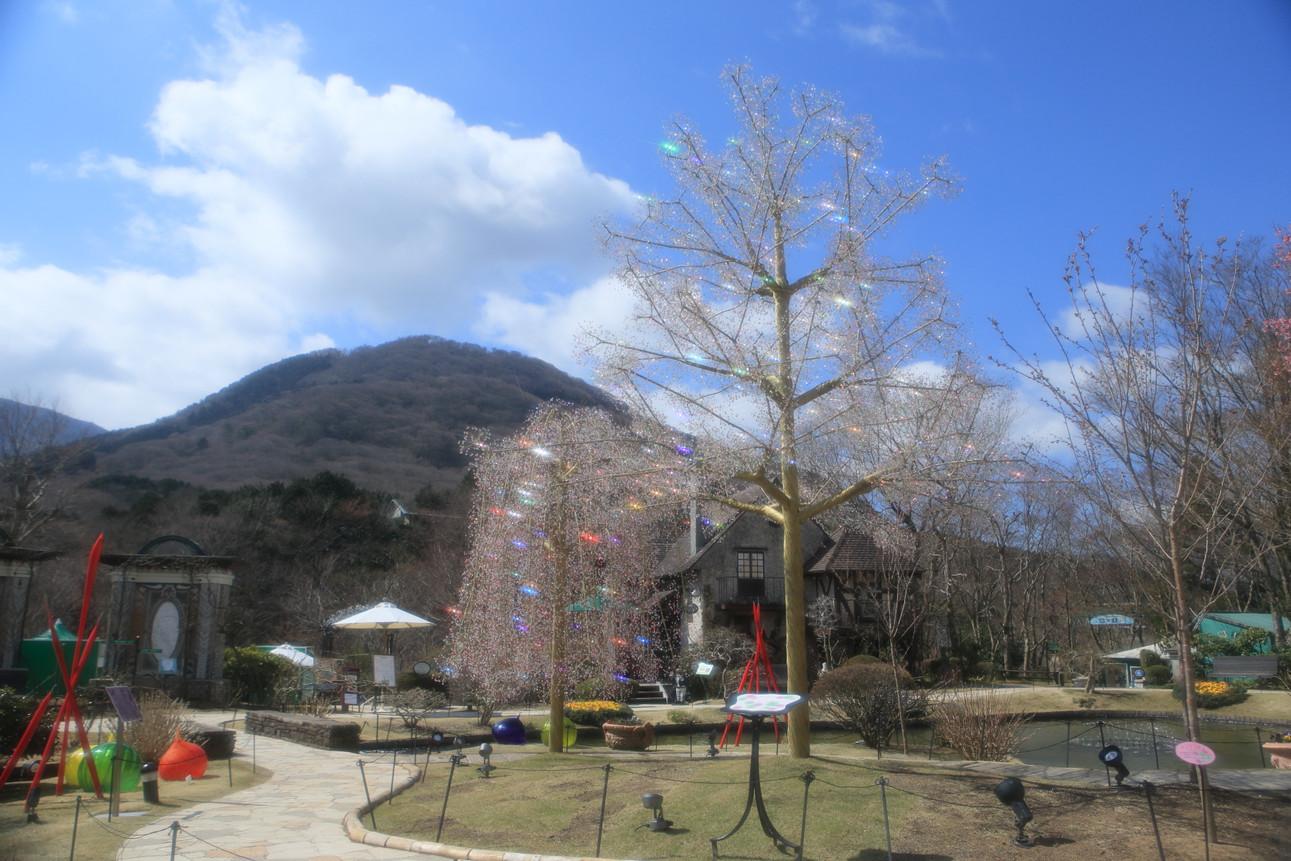 箱根ガラスの森美術館 クリスタル・ガラスのサクラ